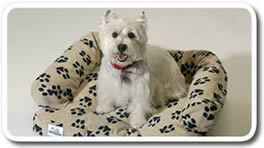 Canine Covers Protect Your Interior From Your Dog